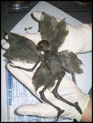 Ditemukan Binatang Aneh Mirip Manusia ! « Think Creati